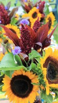 sunfloweramaranthe